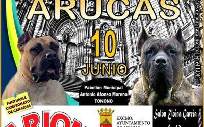 Concurso monográfico de perros Dogo Presa Canario